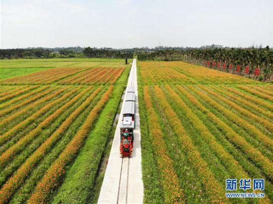 (经济)(1)海南琼海:农旅结合助推乡村振兴