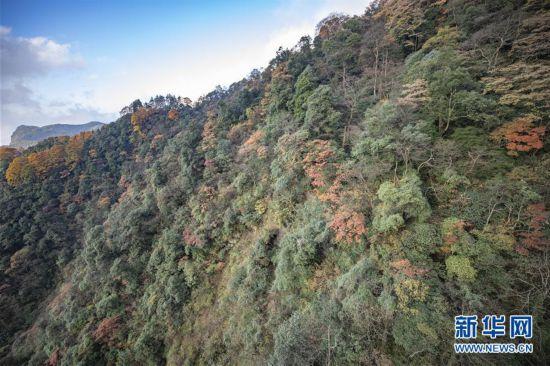 (环境)(1)重庆南川:金佛山上秋意浓